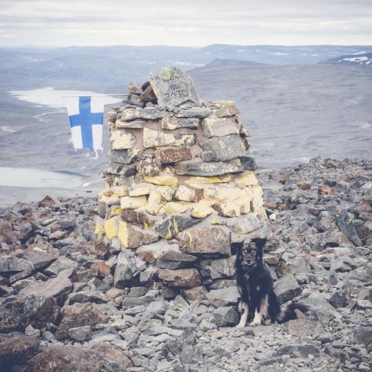 Ringo Suomen huipulla